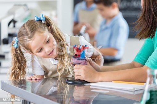 istock Private schoolgirl examines human heart model 862546246