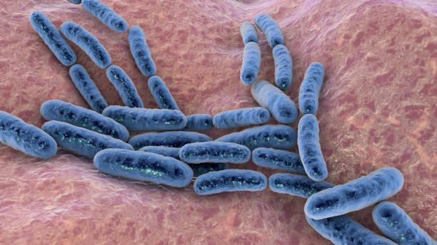 Probiotic bacteria Lactobacillus stock photo