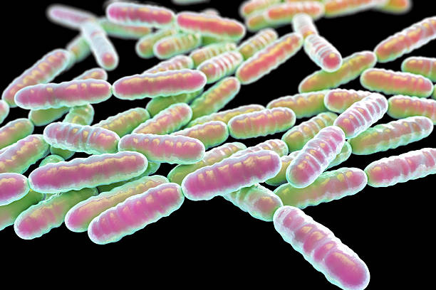 lactobacillus bulgaricus essay Streptococcus thermophilus and lactobacillus delbrueckii subsp bulgaricus cultures were treated with ethanol and tested for viability and β-galactosidase activity.