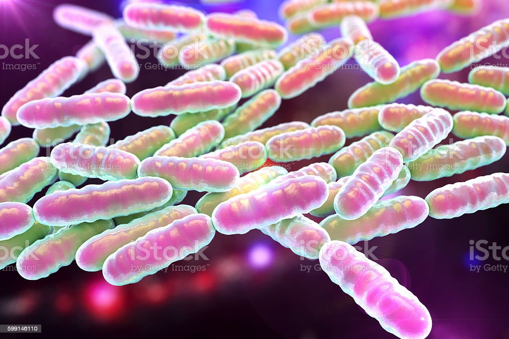 Probiotic bacteria Lactobacillus stock photo