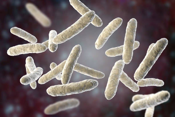 Probiotic bacteria, normal intestinal microflora Probiotic bacteria, normal intestinal microflora, 3D illustration. Bacteria used as probiotic treatment, yoghurts, healthy food bifidobacterium stock pictures, royalty-free photos & images