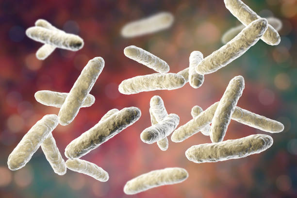 Probiotic bacteria, normal intestinal microflora stock photo