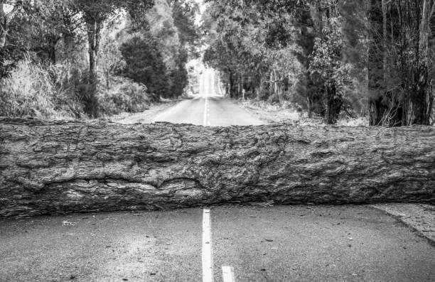 Problem - Fallen tree blocking the road ahead - Black and white A large fallen tree trunk, blocking a country road. knocked down stock pictures, royalty-free photos & images