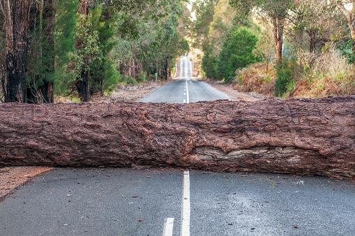 Problem - Fallen tree blocking the road ahead