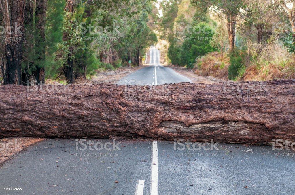 Problem - Fallen tree blocking the road ahead stock photo