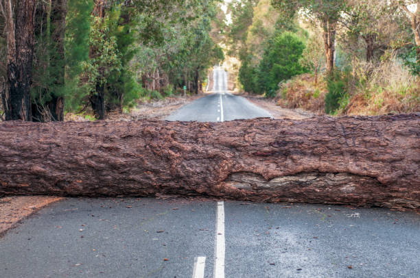 Problem - Fallen tree blocking the road ahead A large tree trunk, fallen during a storm, blocking a country road. fallen tree stock pictures, royalty-free photos & images