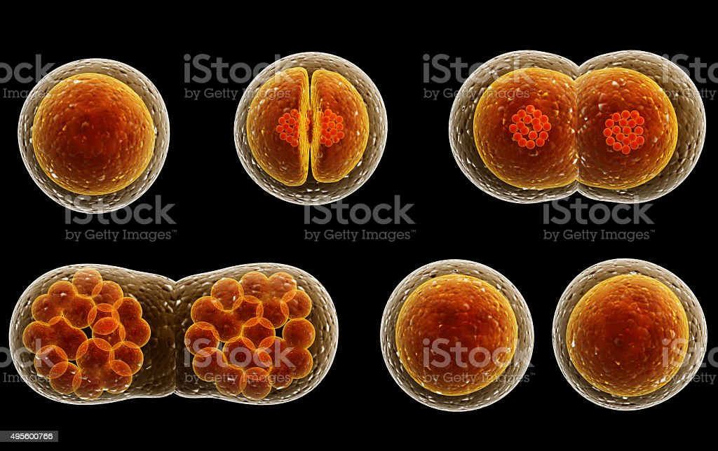 Process division of cell stock photo