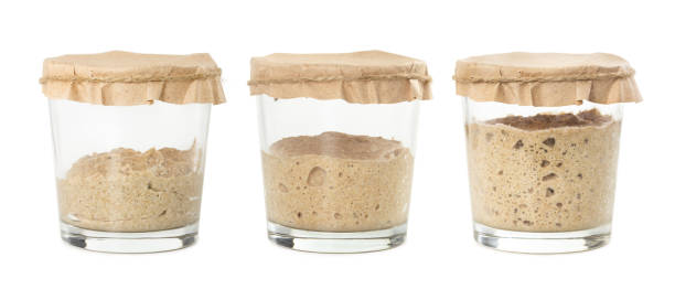 Process of fermentation of homemade rye bread sourdough isolated on white background. Process of fermentation of homemade rye bread sourdough isolated on white background. Active rye starter for bread. Healthy eating concept. fermenting stock pictures, royalty-free photos & images