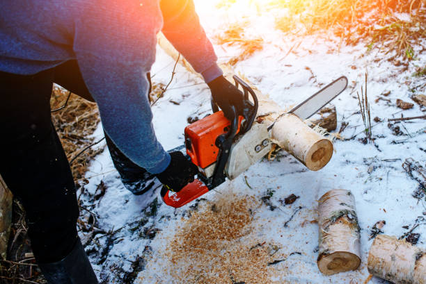 Process of sawing log by chainsaw in the winter stock photo