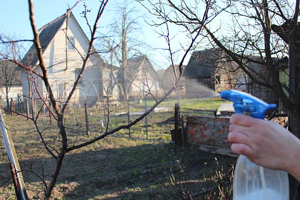 Processamento de árvores no jardim de primavera nos EUA - foto de acervo