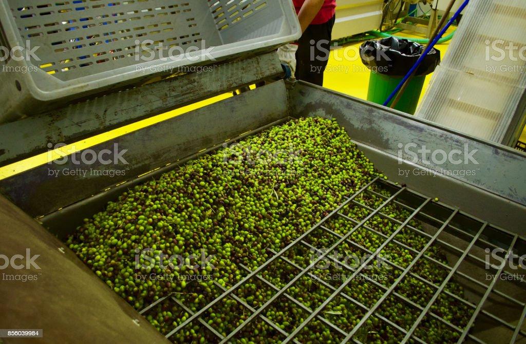 Producción de aceite de oliva - foto de stock