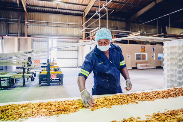 Production Line Worker at a Biscuit Factory in Africa stock photo