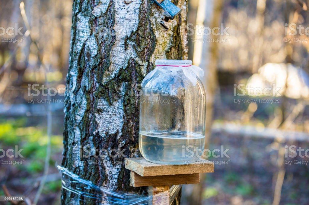 Productie van birch sap in glazen pot in het forest. Lente foto
