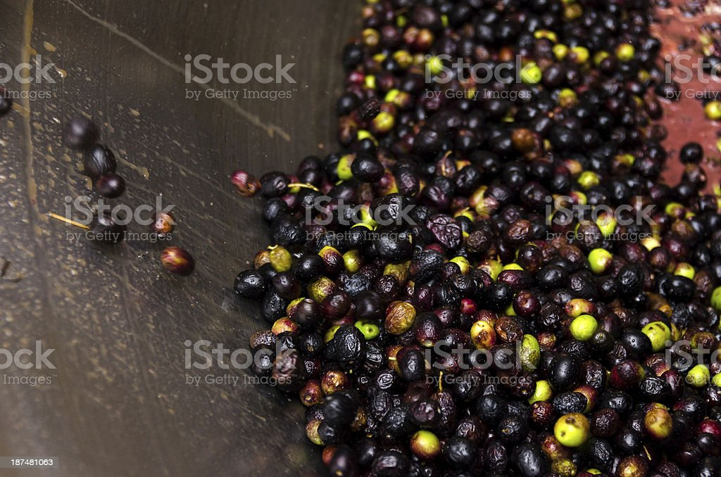 production of olive oil stock photo