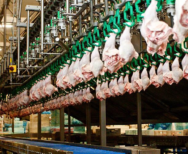 produção de carne branca - peru carne branca imagens e fotografias de stock