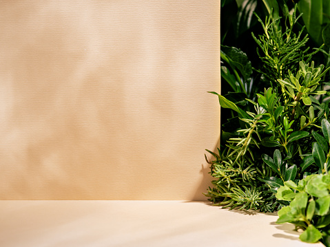 Minimalist botanical background with copy space. Neutral toned showcase for new product demonstration, promotion sale, packaging presentation, cosmetic or merchandise. Light and shadow. Front view.