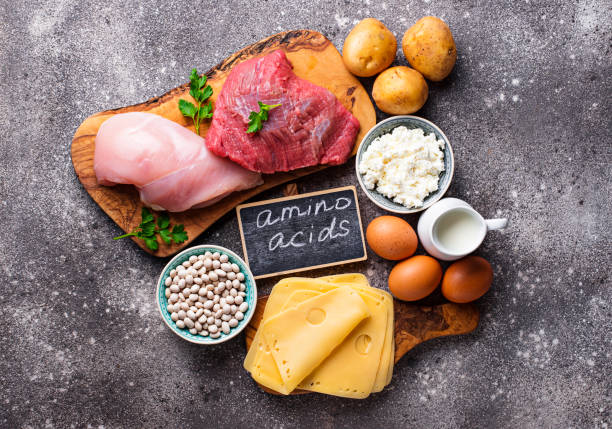 Products rich in amino acids. Products rich in amino acids.  Protein sources and food for bodybuilders amino acid stock pictures, royalty-free photos & images