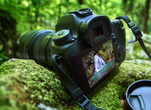 Professional camera in the forest stock photo