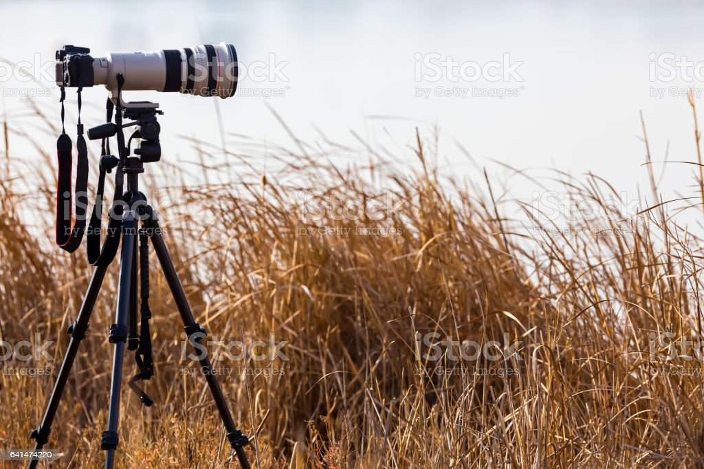 Professional camera with telephoto lens on a tripod stock photo