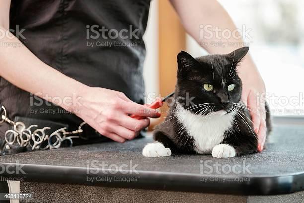 Professional cat groomer in a pet salon picture id468416724?b=1&k=6&m=468416724&s=612x612&h=kvhuyhv04lqi7xhfndnowyin2pvblcqvhfwjy62peym=