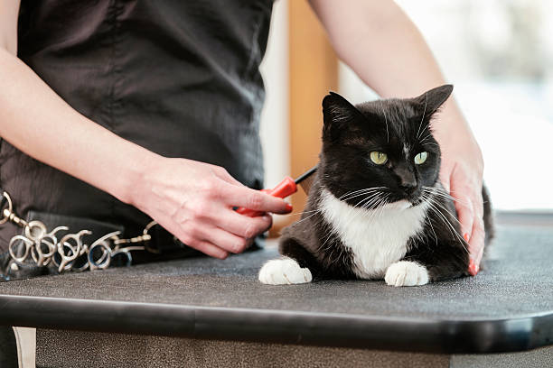 Professional cat groomer in a pet salon picture id468416724?b=1&k=6&m=468416724&s=612x612&w=0&h=tq n6wr8dwkgr yhpubvzm4bgfozpgrinfrqkgvuhzi=