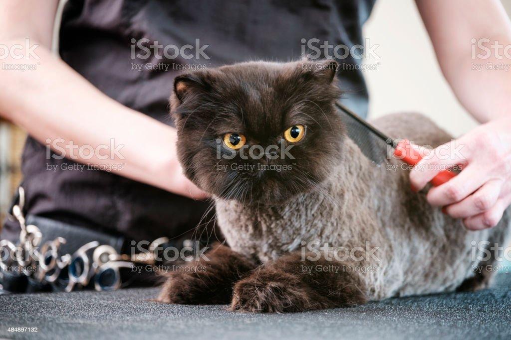 Professionelle Katze Groomer in einem Haustier-Salon – Foto