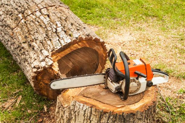 professional chainsaw is on walnut tree. gasoline saw - chainsaw stock photos and pictures