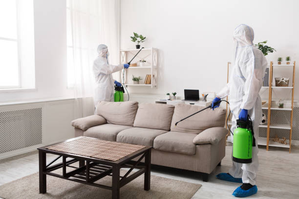 Professional cleaning with disinfectant spray of all home stock photo