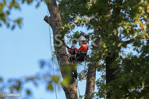 St. Petersburg, Russia - September 12, 2019: A professional climber with a chainsaw, safety belts, a helmet and protective equipment cuts a tall, dry tree in a park at a height