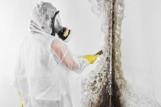 ein professionelles desinfektionsgerät in overalls verarbeitet die wände von schimmel mit einem spachtel. entfernung von schwarzem pilz in der wohnung und haus. aspergillus. - entfernt stock-fotos und bilder