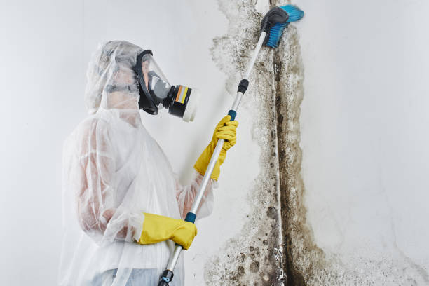 """een professionele desinfector in overalls verwerkt de wanden van schimmel met een borstel. verwijdering van zwarte schimmel in het appartement en huis. aspergillus. """" n - schimmel stockfoto's en -beelden"""