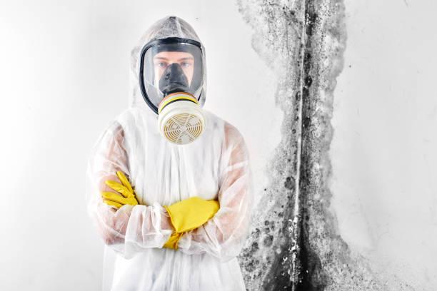 Ein professionelles Desinfektionsgerät in Overalls verarbeitet die Wände von Schimmel. Entfernung von schwarzem Pilz in der Wohnung und Haus. Aspergillus.