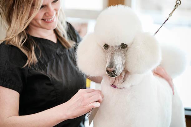 Toiletteur professionnel chien dans un Salon de beauté pour les animaux de compagnie  - Photo