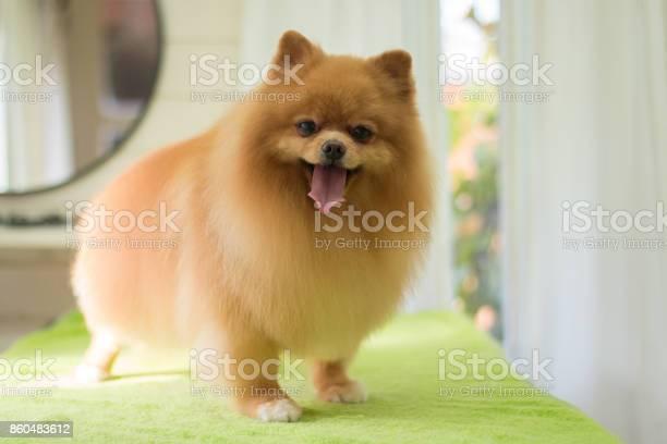 Professional dog grooming picture id860483612?b=1&k=6&m=860483612&s=612x612&h= h2bfjui1prvhmforu1mlruh5 n1az6vjausmysjxek=