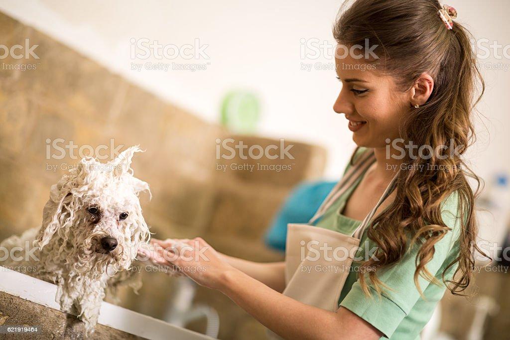 Professional dog showering stock photo