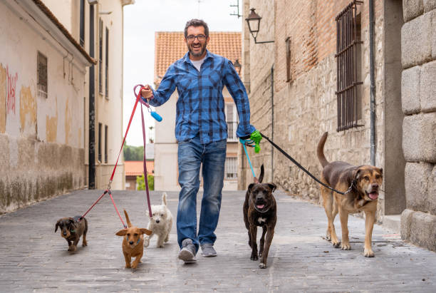 Professional dog walker or pet sitter walking a pack of cute breed picture id1178180485?b=1&k=6&m=1178180485&s=612x612&w=0&h=9w87c1pzkb4vickyhxgc0zw5fhlpuh96w1kpl9u9cdu=