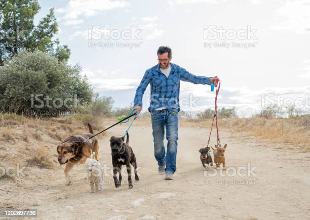 Professional dog walker or pet sitter walking a pack of cute breed picture id1202897736?b=1&k=6&m=1202897736&s=612x612&h=zx kjwyo xd6hwfcdqsriih2xio3xy4 03ryglb4  o=