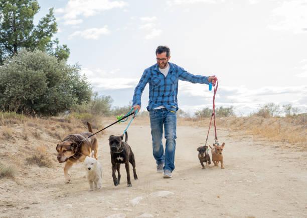 Professionelle Hundewanderer oder Haustiersitter zu Fuß ein Rudel von niedlichen verschiedenen Rasse und Rettungshunde an der Leine im Park. Glückliche Haustiere und Hundeliebhaber gründen kleine Unternehmen. – Foto
