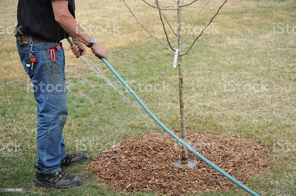 Professional gardener. stock photo