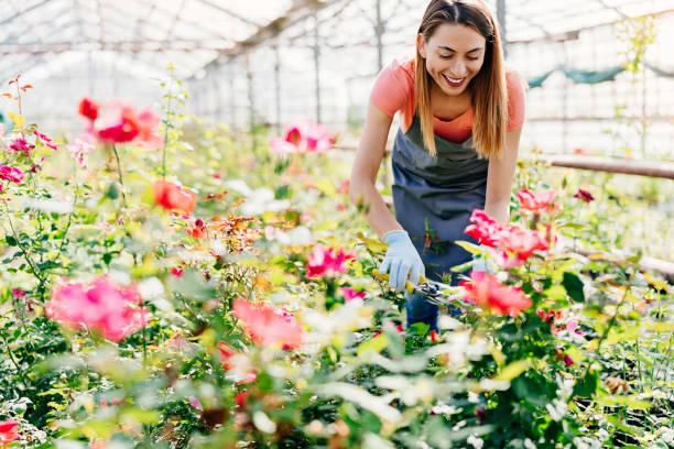 Professional gardener pruning rose plants picture id1060532396?b=1&k=6&m=1060532396&s=612x612&w=0&h=nx5g1wj601zmgpstdrph7ons42piid9vc7 c cgtfm8=