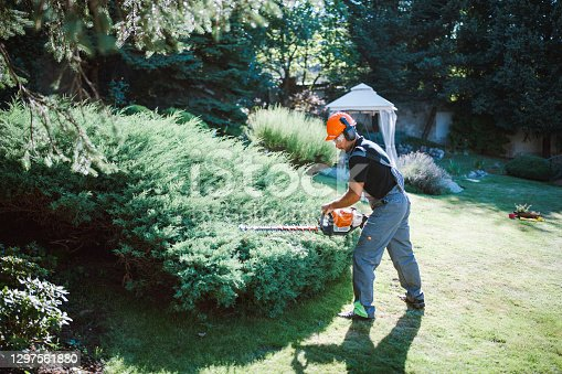 Professional gardener with protective equipment cutting hedge with electric saw in garden.