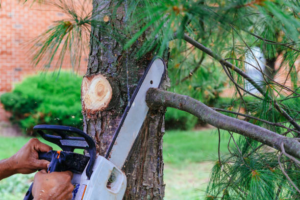 professional is cutting trees using a chainsaw - cutter stock pictures, royalty-free photos & images