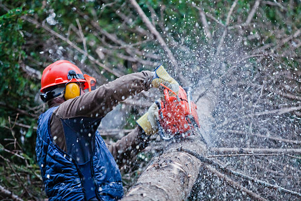 Professional Lumberjack Cutting a big Tree in the Forest stock photo