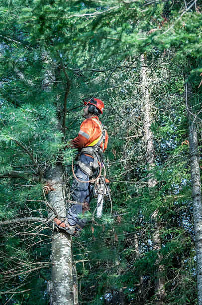 Professional lumberjack cutting tree on the top stock photo
