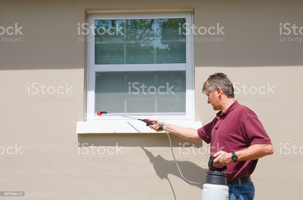 Professional pest control service DIY home owner stock photo