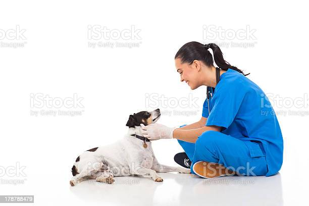 Professional vet doctor playing with pet dog picture id178788479?b=1&k=6&m=178788479&s=612x612&h=dkjdqtbi1n yutudt7vfdzwgchevtfveqqnqweyhxyi=