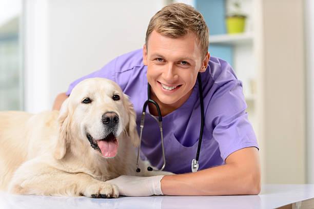 Professional vet examining a dog picture id492032156?b=1&k=6&m=492032156&s=612x612&w=0&h=bn9axk 9acyomkqgbiqckdsi1ppyvvuzkhybt1tgjns=