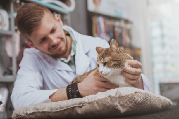 Professional vet examining adorable cat picture id1153019851?b=1&k=6&m=1153019851&s=612x612&w=0&h=qtydejqnibsolza09owgbcy yasyd mfqglfz60m3um=