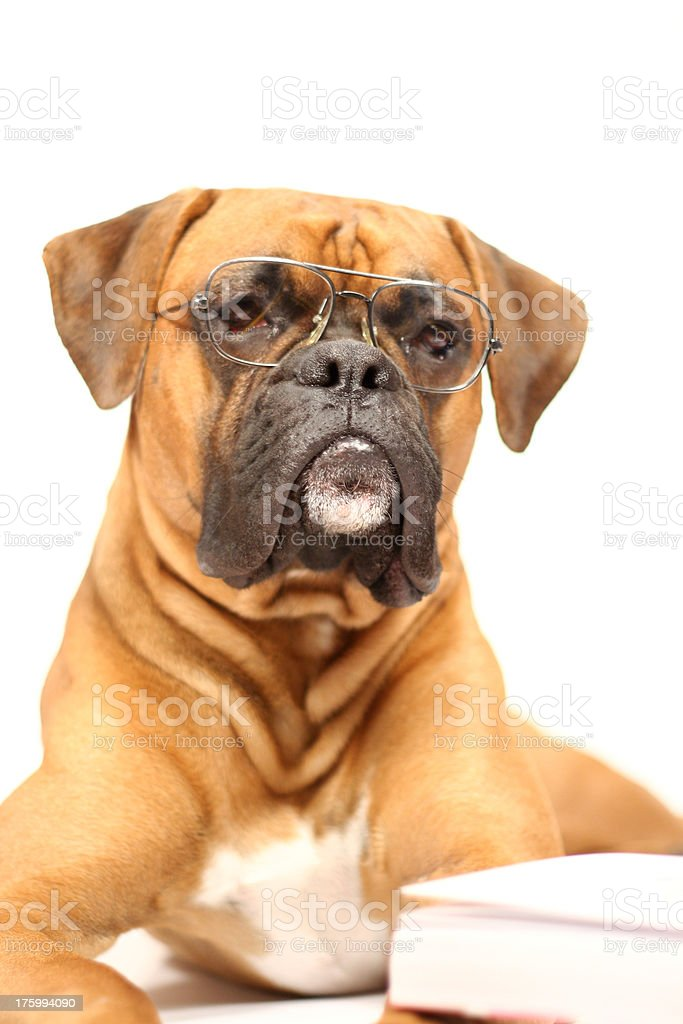 Professor Max royalty-free stock photo