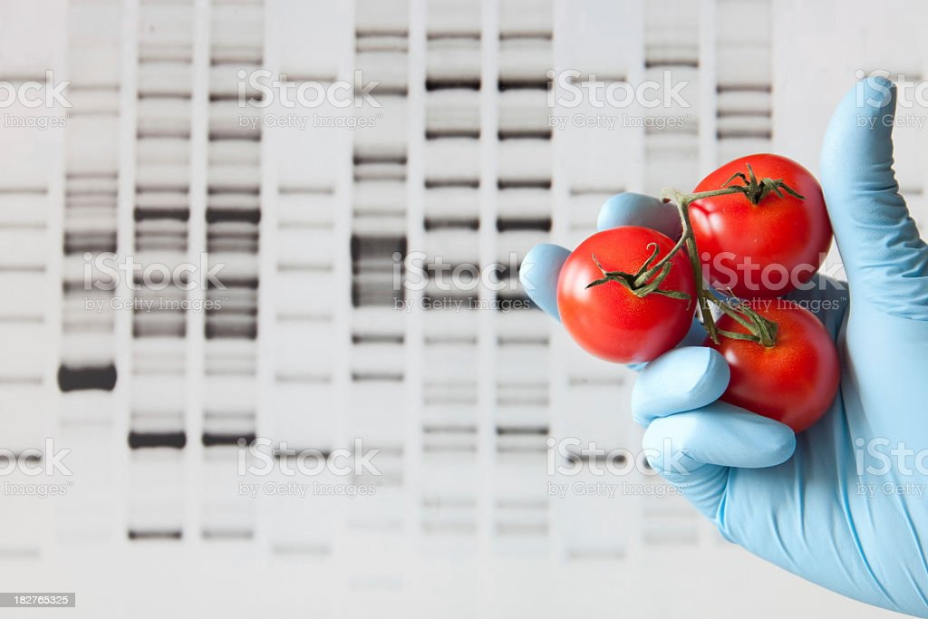 DNA profile background with gloved hand and tomatoes royalty-free stock photo
